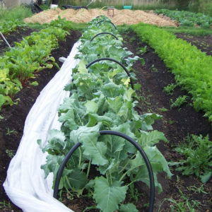 Parcelle de légumes sur la ferme d'Ortalissa