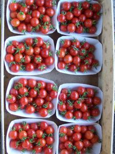 tomates ferme d'Ortalissa