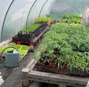 serre a plants