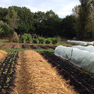 culture de légumes bio