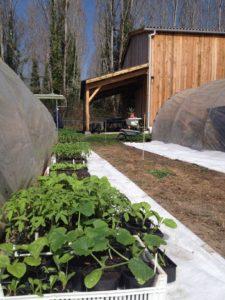 plants ferme d'Ortalissa